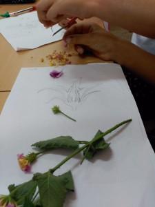 Partes de la flor 3º IIMM (1)