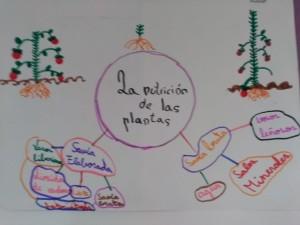 iimm plantas (1)