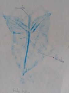 iimm plantas (2)