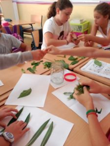 Clasificación de hojas según su forma